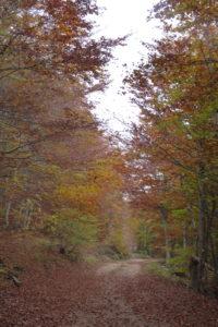 couleur d'automne en croatie massif du velebit